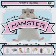 hamster00